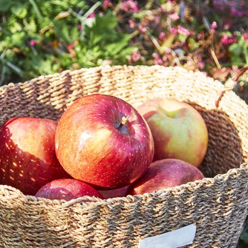 가정용 햇 사과 빨간사과 8kg